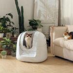 Esta caja de arena inteligente controlará la salud de tus gatos